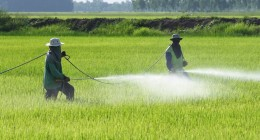 pesticidi-campi-260x140