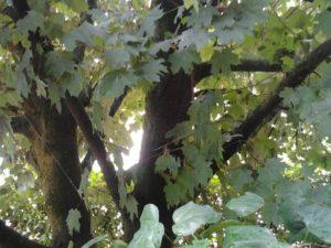 foglie-sera-luce
